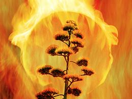 Burning Pita